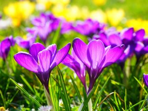 Spring Equinox: Growth and Resurrection